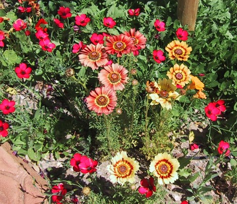 GARDENING TIME IN HAVASU - Winter Gardens in the Desert