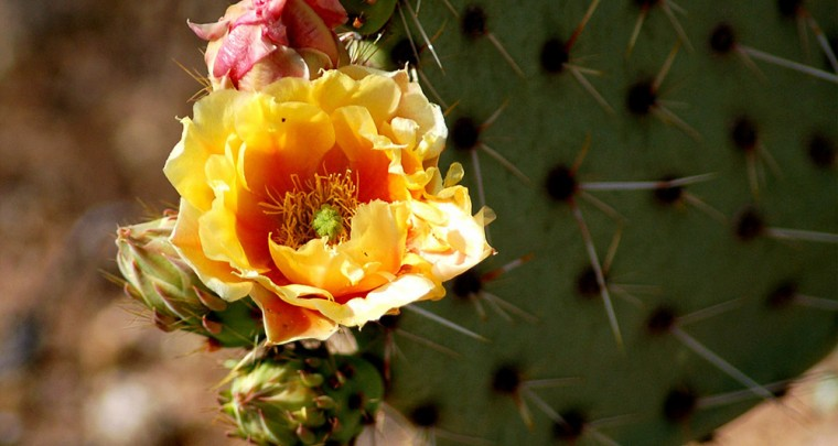 Color Your World - Gardening in Lake Havasu City
