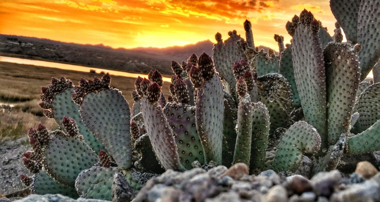 Photo Finish - A Cactus Point of View