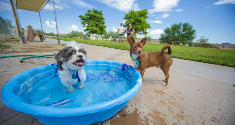 Pet Friendly in Lake Havasu