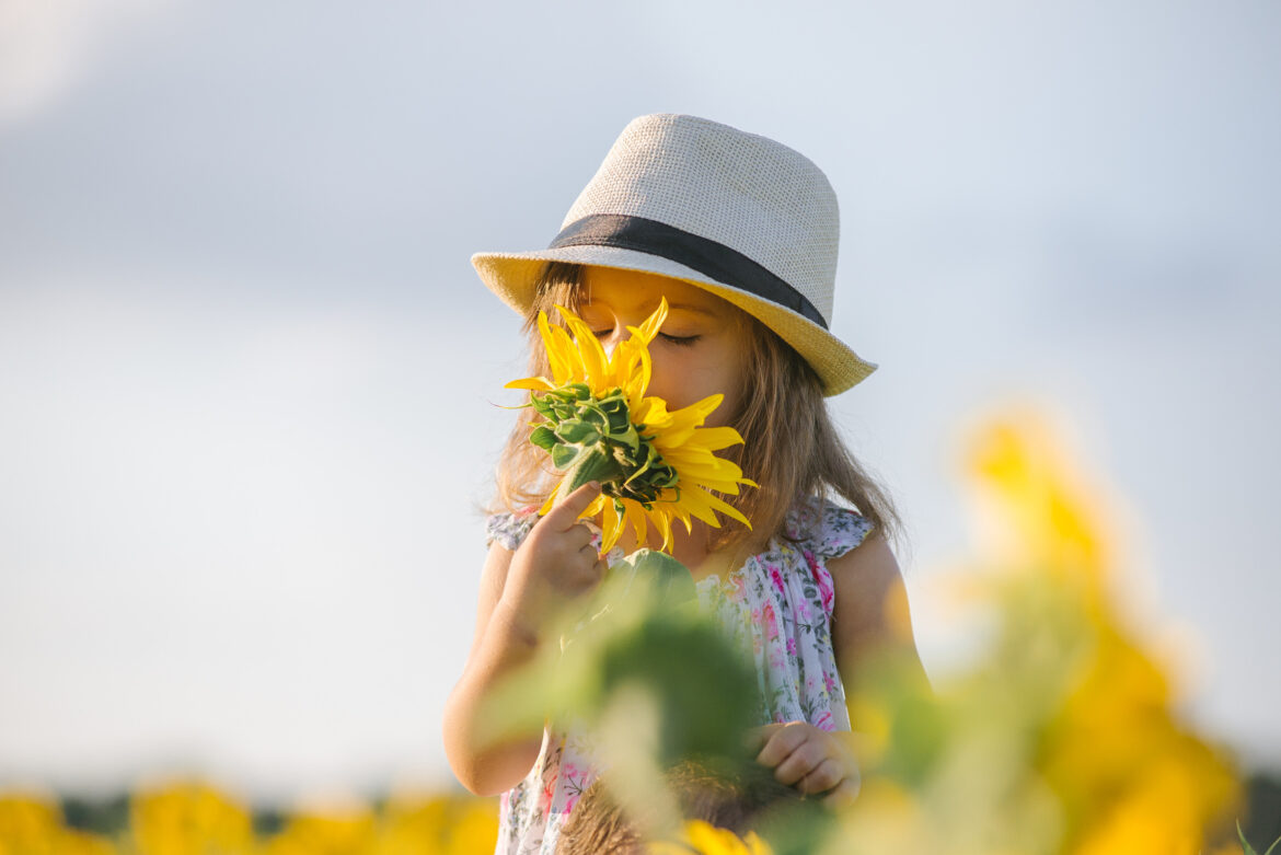Child and sunflower, summer, nature and fun. Summer holiday. Little girl sniffing a sunflower